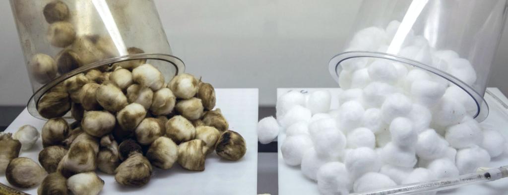 Smoking vs Vaping as shown on cotton wool balls.