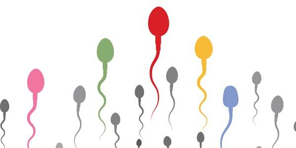 coloured sperm cells