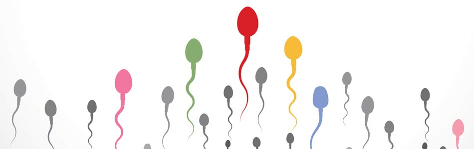 coloured sperm cells